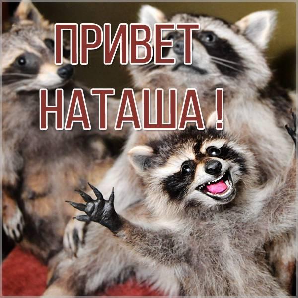 Смешная картинка привет Наташа - скачать бесплатно на otkrytkivsem.ru