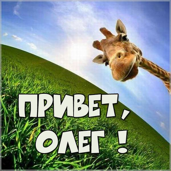 Смешная картинка привет Олег - скачать бесплатно на otkrytkivsem.ru