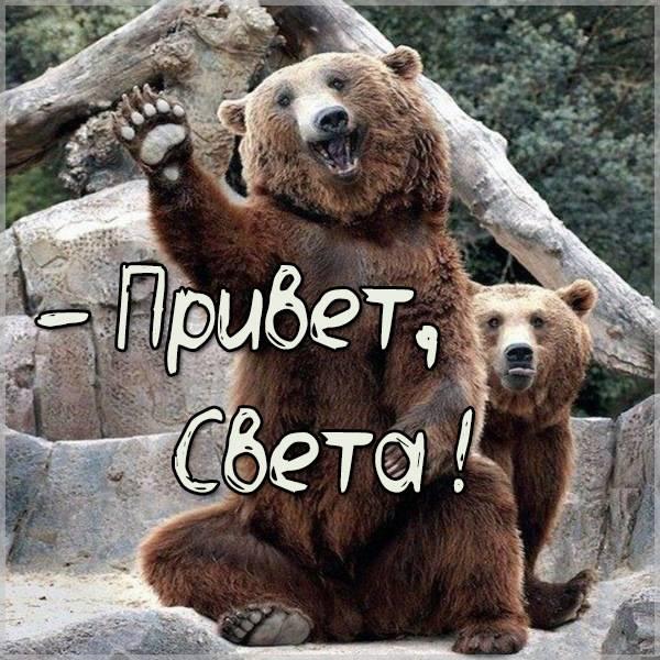 Смешная картинка привет Света - скачать бесплатно на otkrytkivsem.ru