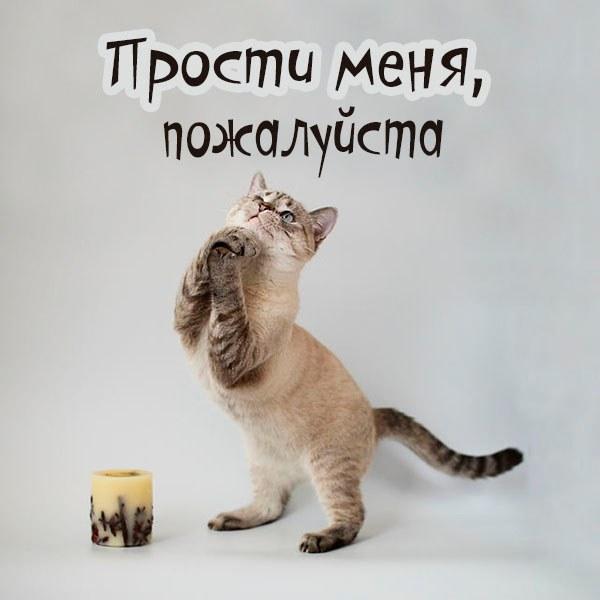 Смешная картинка прости меня пожалуйста - скачать бесплатно на otkrytkivsem.ru