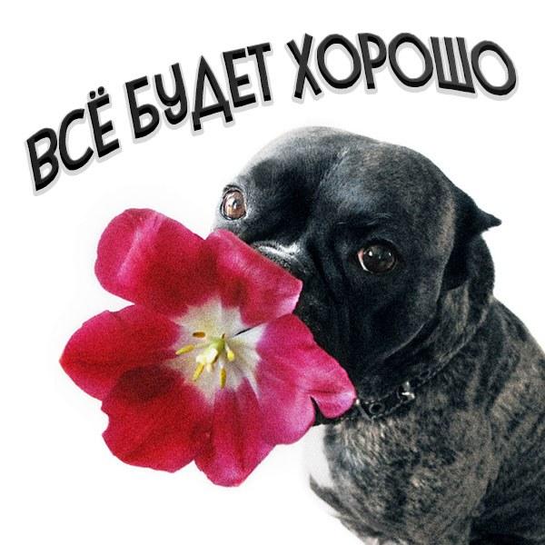 Смешная картинка с надписью все будет хорошо - скачать бесплатно на otkrytkivsem.ru
