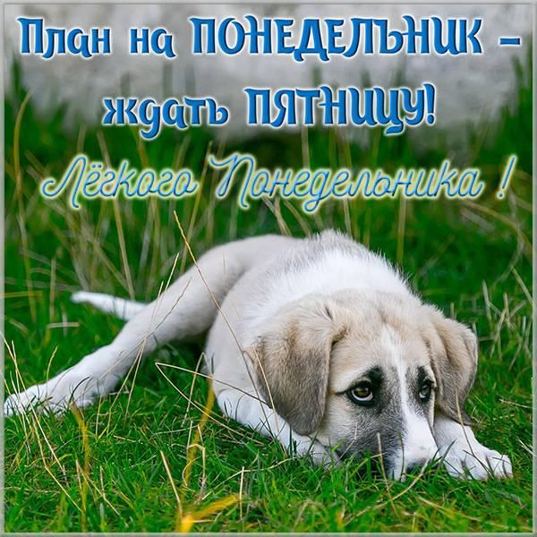 Смешная картинка с пожеланием легкого понедельника - скачать бесплатно на otkrytkivsem.ru