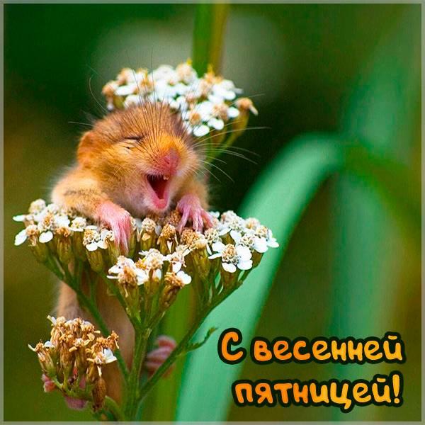 Смешная картинка с весенней пятницей - скачать бесплатно на otkrytkivsem.ru