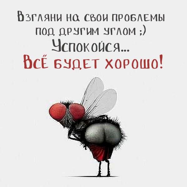 Смешная картинка все будет хорошо цитата - скачать бесплатно на otkrytkivsem.ru