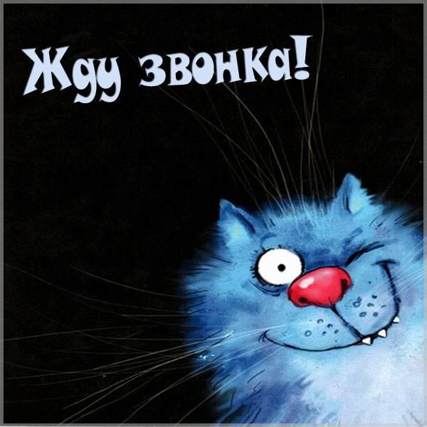 Смешная картинка жду звонка - скачать бесплатно на otkrytkivsem.ru