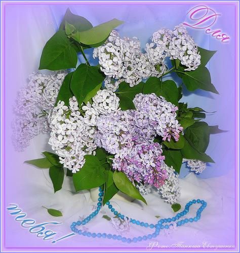 Цветы для друзей - скачать бесплатно на otkrytkivsem.ru
