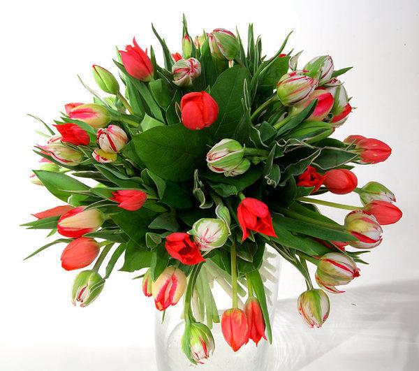 Цветы на белом фоне - скачать бесплатно на otkrytkivsem.ru