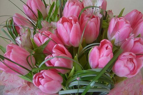 Тюльпаны на 8 Марта фото - скачать бесплатно на otkrytkivsem.ru