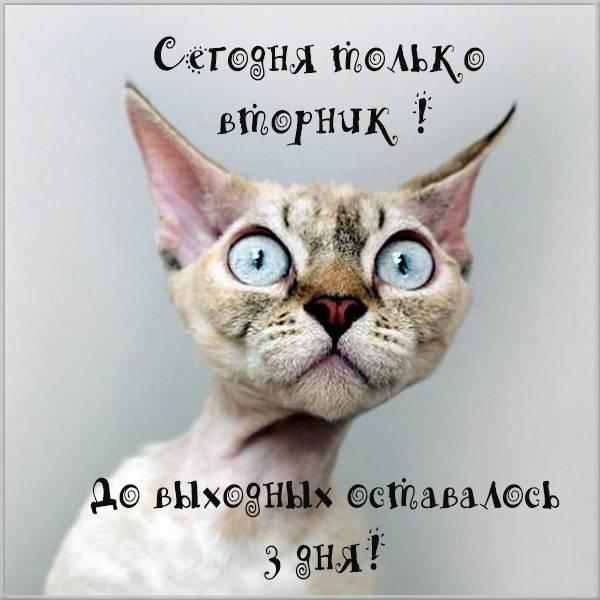 Веселая картинка про вторник на работе - скачать бесплатно на otkrytkivsem.ru