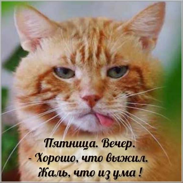 Веселая картинка с пятницей с кошками - скачать бесплатно на otkrytkivsem.ru