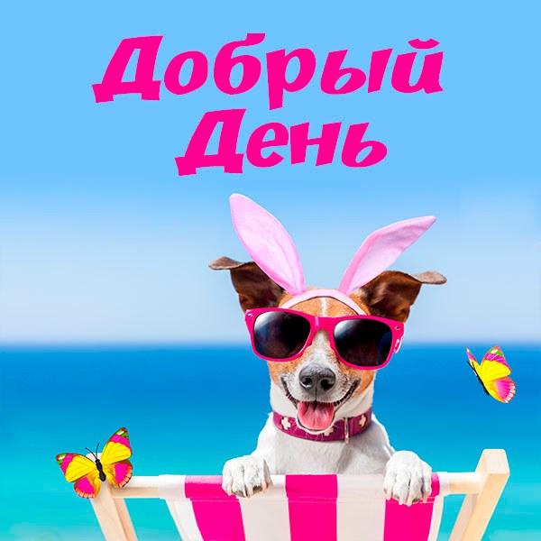 Веселая открытка добрый день - скачать бесплатно на otkrytkivsem.ru