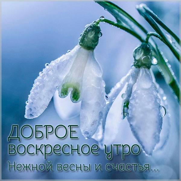 Весенняя картинка доброе воскресное утро красивая - скачать бесплатно на otkrytkivsem.ru