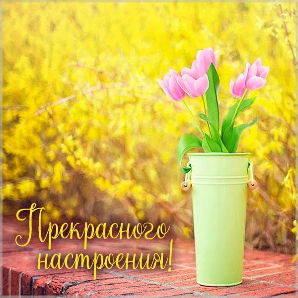 Весенняя картинка прекрасного настроения красивая - скачать бесплатно на otkrytkivsem.ru