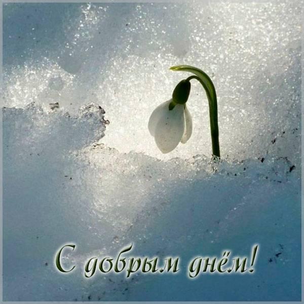 Весенняя картинка с добрым днем позитивная - скачать бесплатно на otkrytkivsem.ru