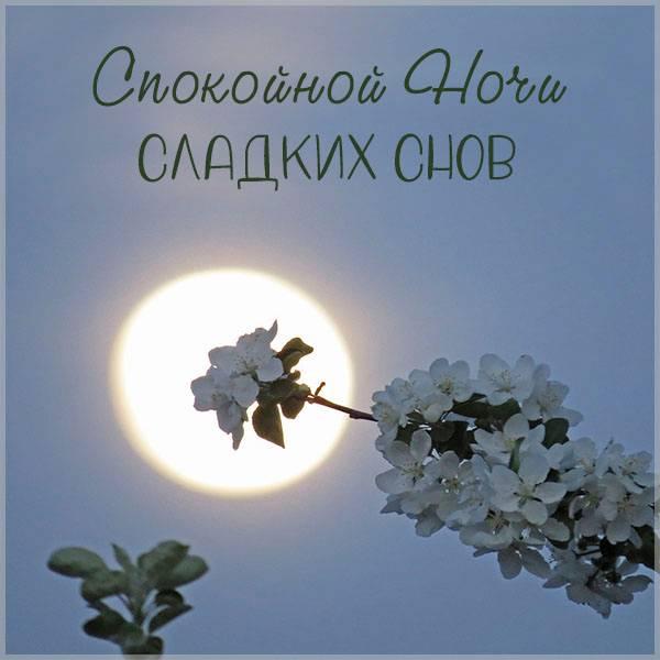 Весенняя картинка спокойной ночи сладких снов - скачать бесплатно на otkrytkivsem.ru