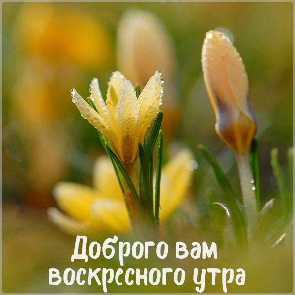 Весенняя открытка доброго вам воскресного утра - скачать бесплатно на otkrytkivsem.ru