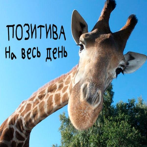 Виртуальная картинка позитива на весь день - скачать бесплатно на otkrytkivsem.ru