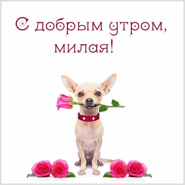 Виртуальная картинка с добрым утром прикольную женщине - скачать бесплатно на otkrytkivsem.ru