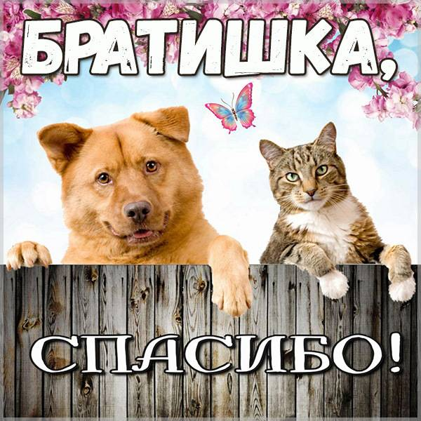 Виртуальная картинка спасибо братишка - скачать бесплатно на otkrytkivsem.ru