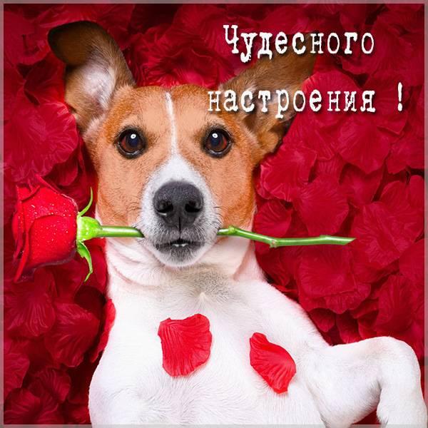 Виртуальная открытка чудесного настроения - скачать бесплатно на otkrytkivsem.ru