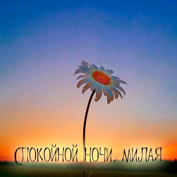 Виртуальная открытка спокойной ночи милая - скачать бесплатно на otkrytkivsem.ru