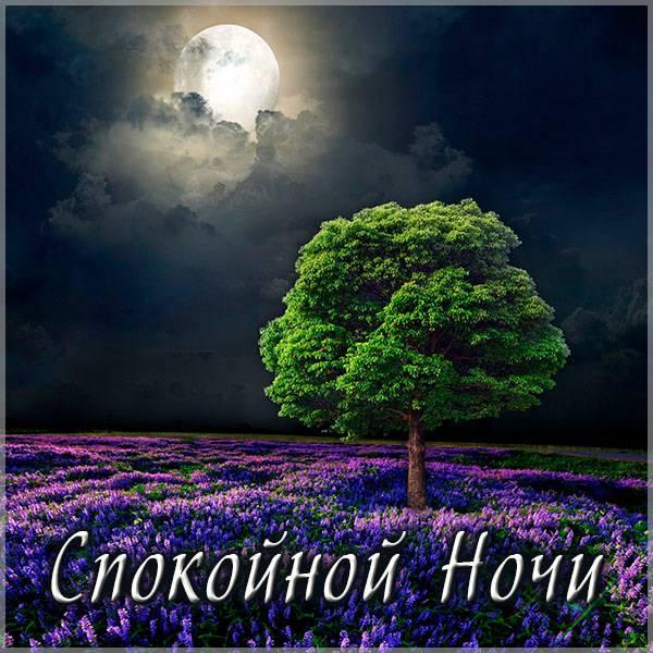 Виртуальная открытка спокойной ночи женщине - скачать бесплатно на otkrytkivsem.ru