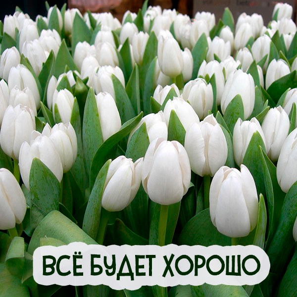 Виртуальная открытка все будет хорошо - скачать бесплатно на otkrytkivsem.ru