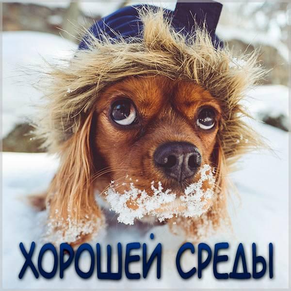Зимняя открытка хорошей среды - скачать бесплатно на otkrytkivsem.ru