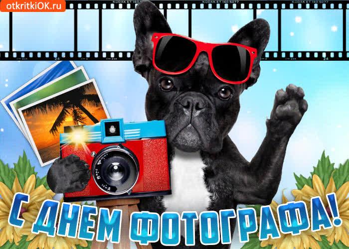С днем фотографа друзья поздравляю - скачать бесплатно на otkrytkivsem.ru